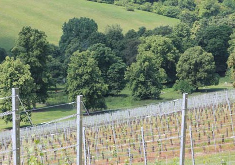 Fairmile Vineyard, Henley