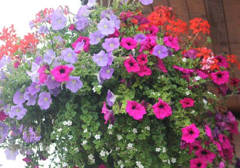 Britain in Bloom Judging in Henley 2015