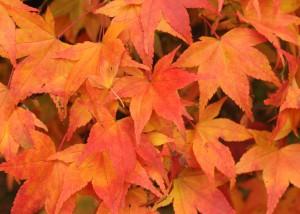 Henley Herald autumn